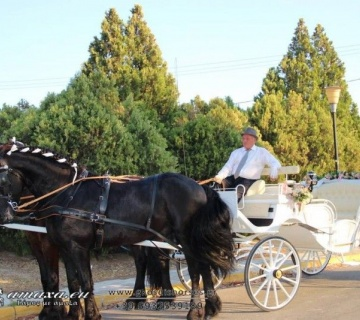 Άμαξες Γάμου Γκοσδής